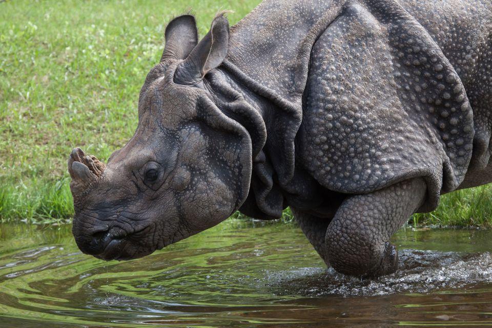 Rhinos - The Kaziranga National Park, India