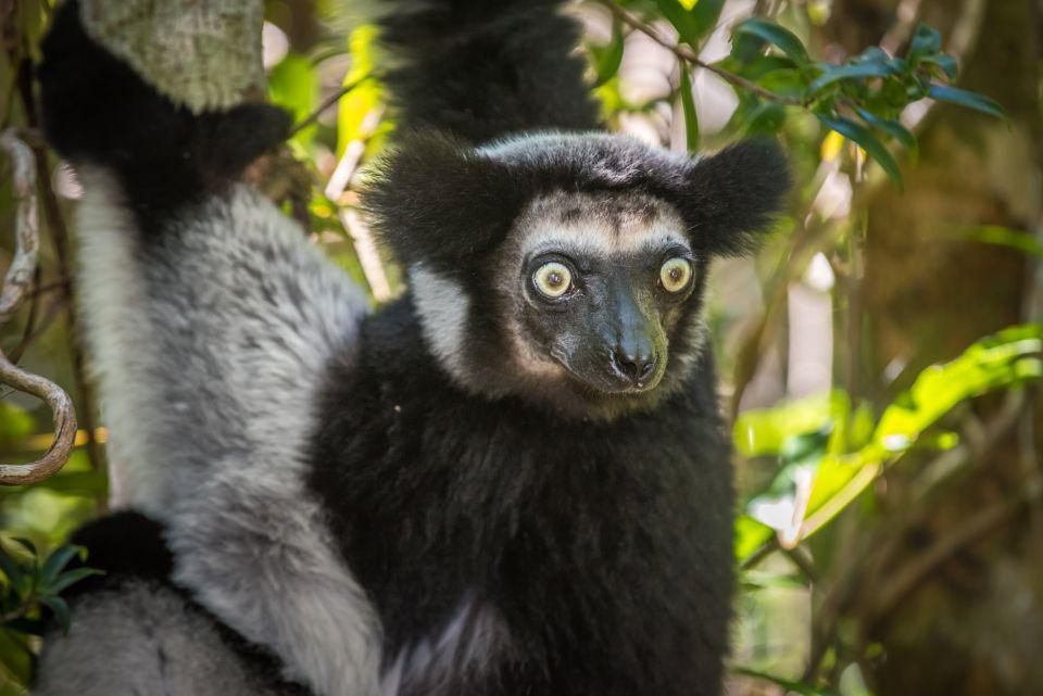 Lemurs - Andasibe-Mantadia National Park, Madagascar