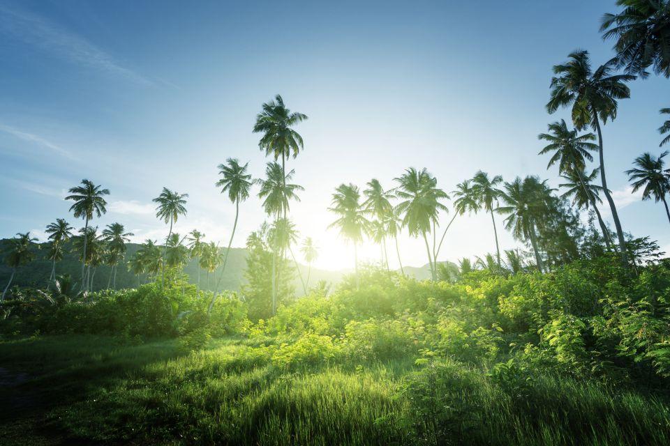 Jouer à l'aventurier dans les Seychelles