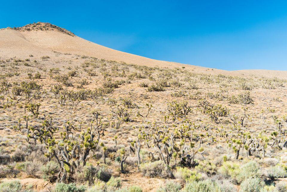 À la découverte des terres brûlées de Californie