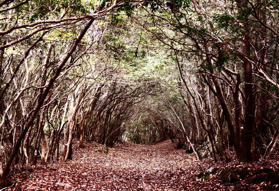 La forêt Aokigahara, une forêt « suicide », au Japon