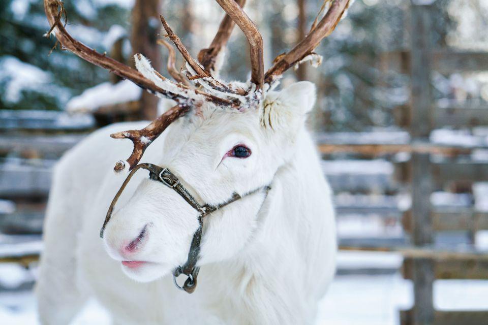 Indirizzo Di Babbo Natale Lapponia.Lapponia Nel Villaggio Di Babbo Natale Di Fianco Al Circolo Polare