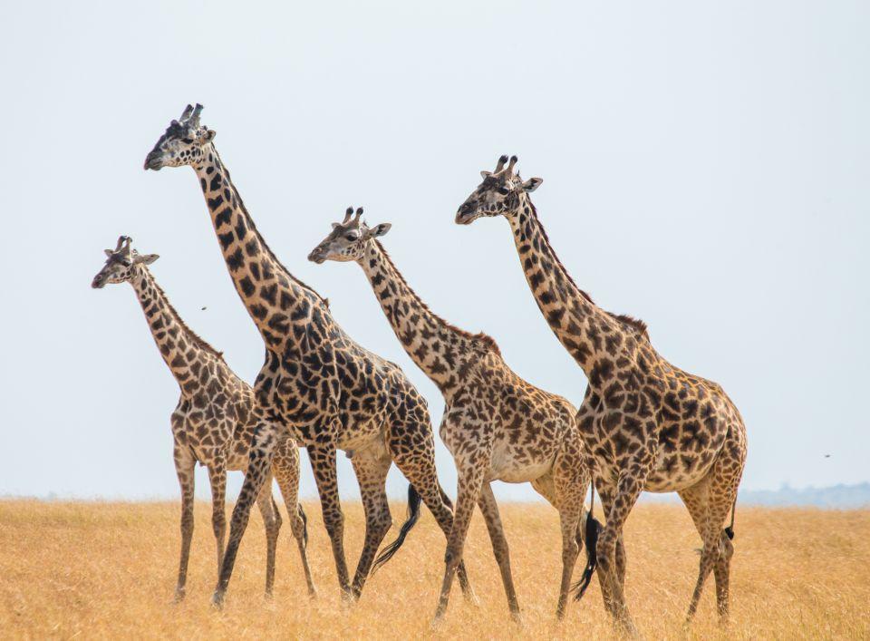 Go on a wildlife safari