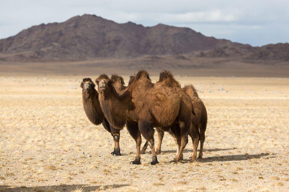 Wüste Gobi in der Mongolei