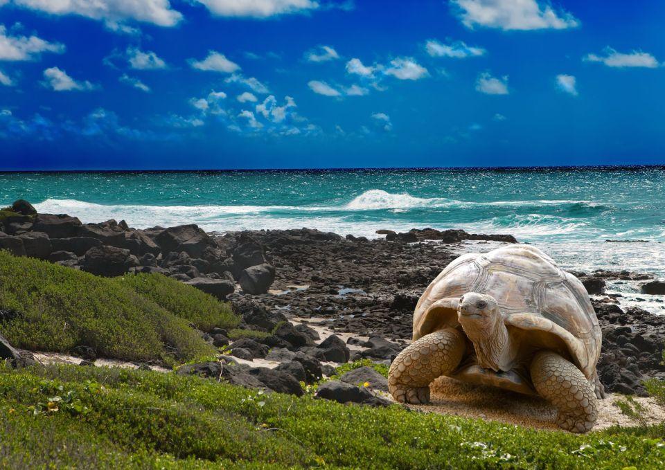 1-Les îles Galapagos, Équateur