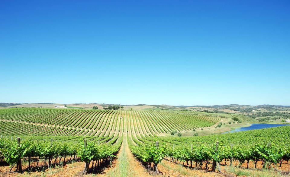 Alentejo, territorio de viñedos y grandes vinos