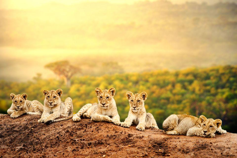 Les éco-safaris