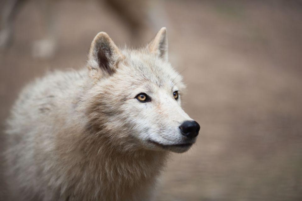 La Maison des Loups (Ariège)