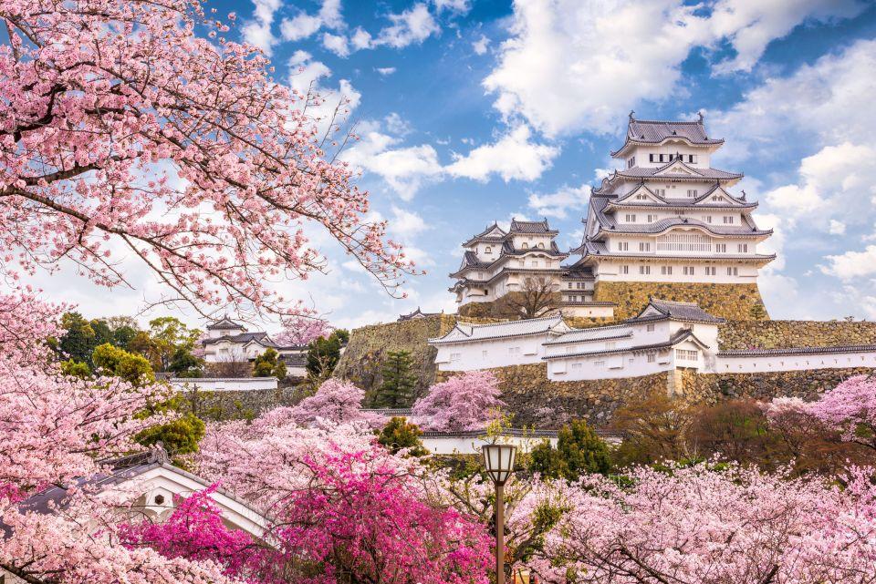 C 39 est le printemps au japon les cerisiers sont en fleurs et c 39 est magnifique photos easyvoyage - Greffe du cerisier au printemps ...