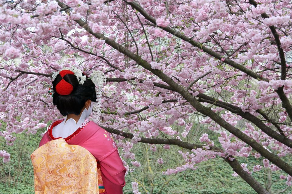 A Geisha facing a blossomed tree