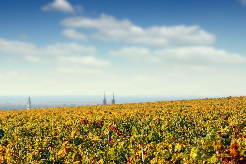 2. La ruta de los viñedos en Serbia
