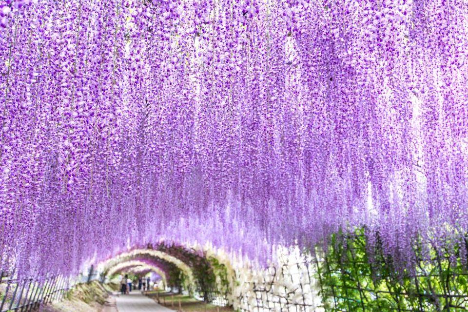20 viajes para los amantes de la naturaleza easyviajar for Jardines kawachi fuji