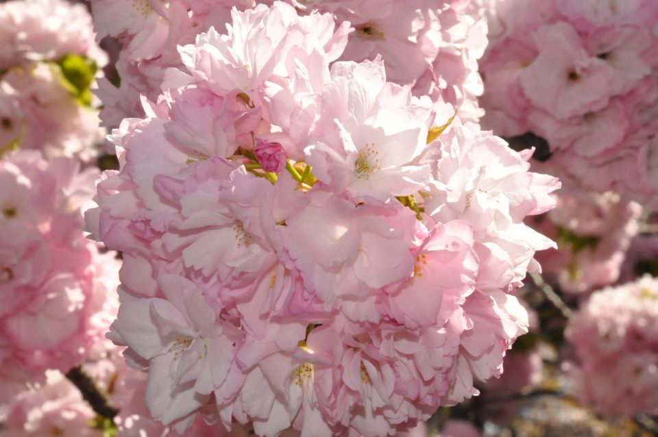 Visit the New York Botanical Garden