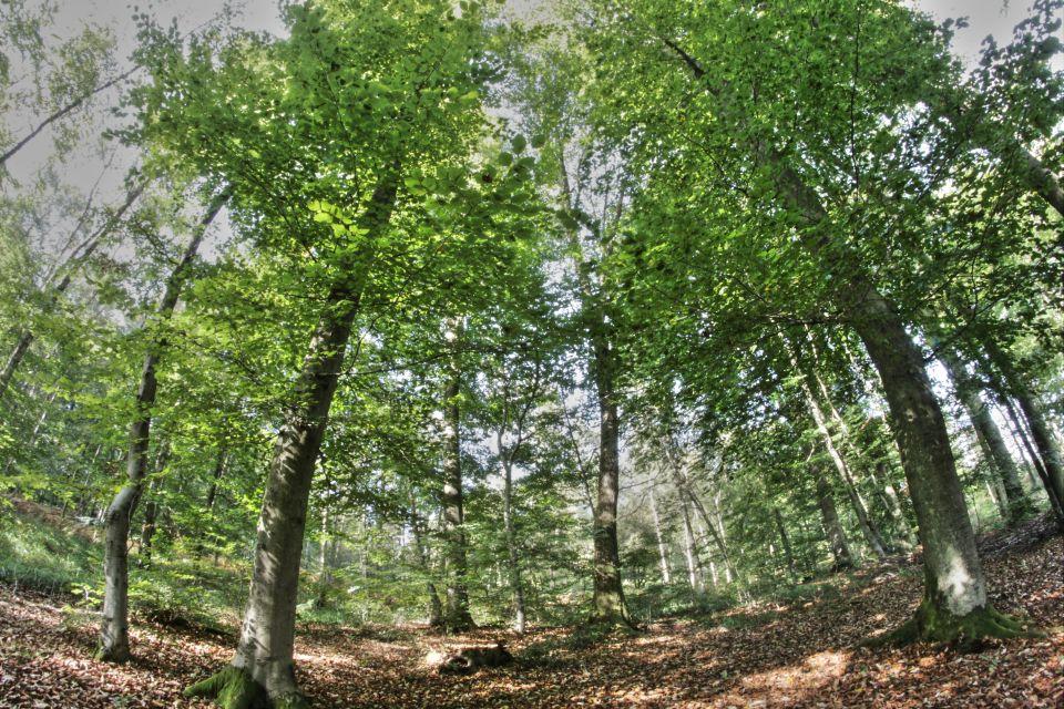 Francia: pasa tus vacaciones en una cabaña en un árbol - Easyviajar