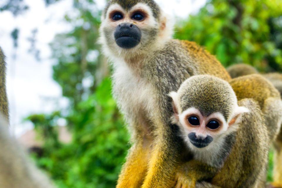 Rencontres insolites en terre d'Amazonie