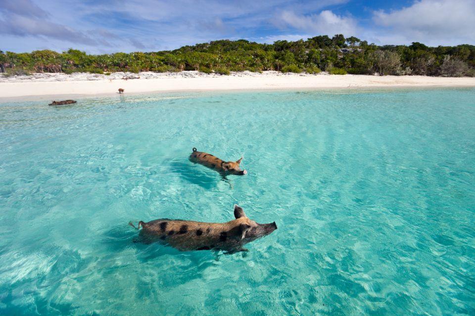 2. Cayo Big Major, Bahamas.