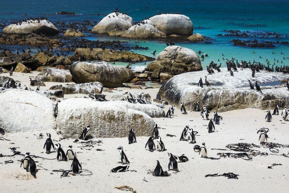 5. Boulders Beach, Sudáfrica.