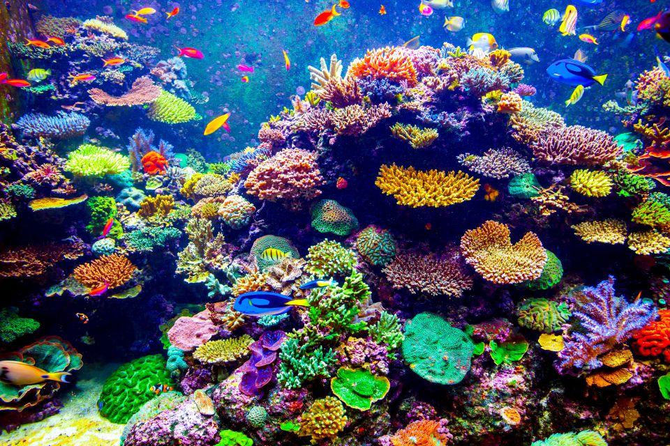 2. Barrera de Coral de Andros, Bahamas