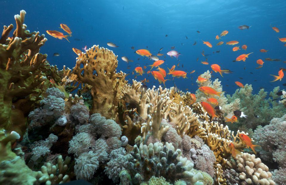 La barriera corallina del Mar Rosso