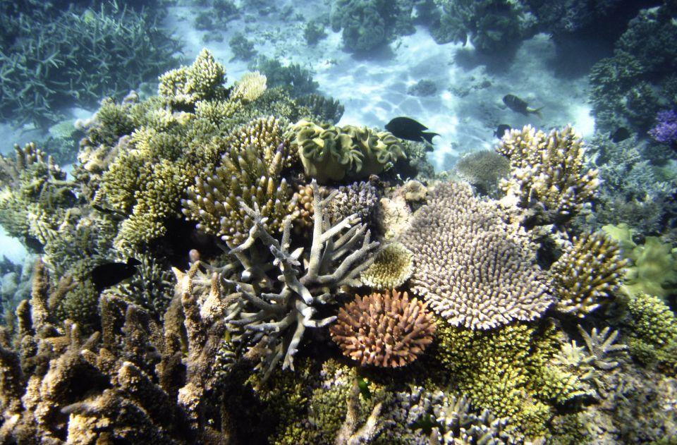 Grande Barriera Corallina, Queensland in Australia