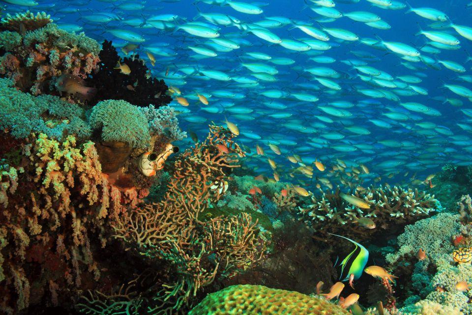 Coral Triangle, Indonesia
