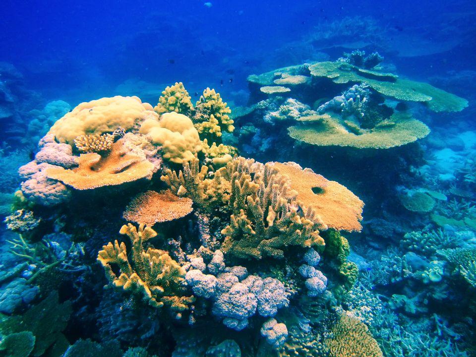 Le barriere coralline della Polinesia e delle Isole Fiji