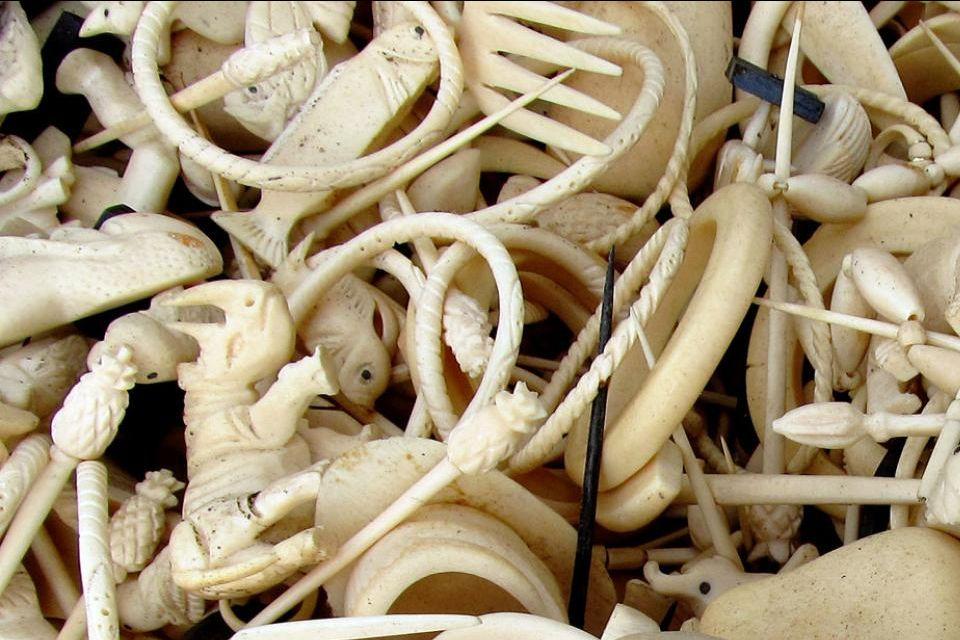 Elfenbein, Reptilienleder und Felle