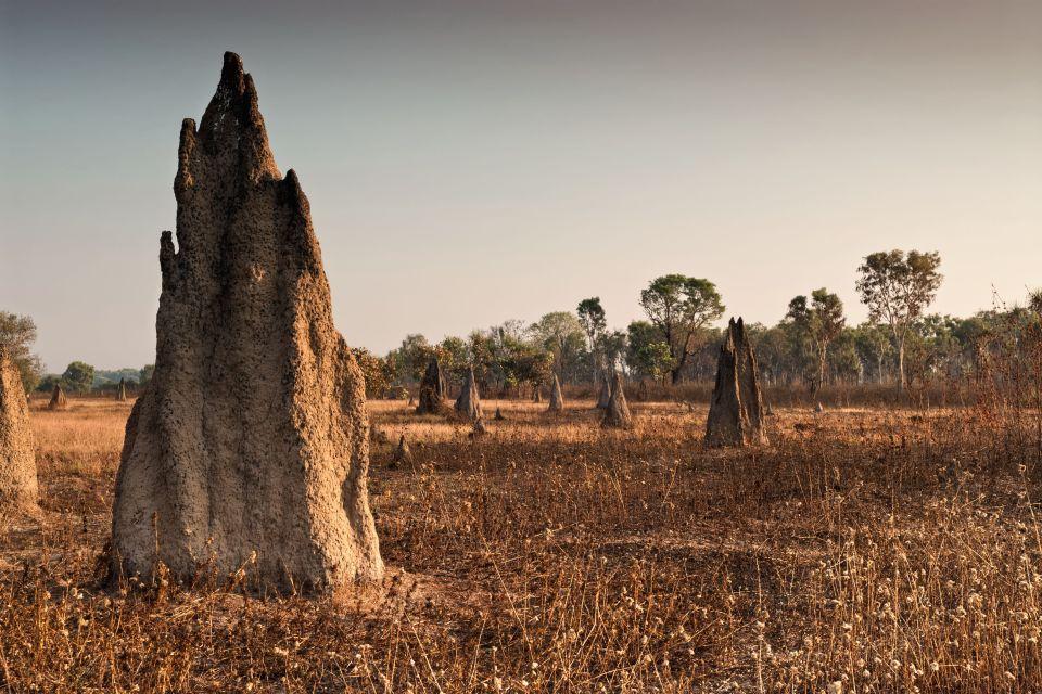 Les termites boussoles