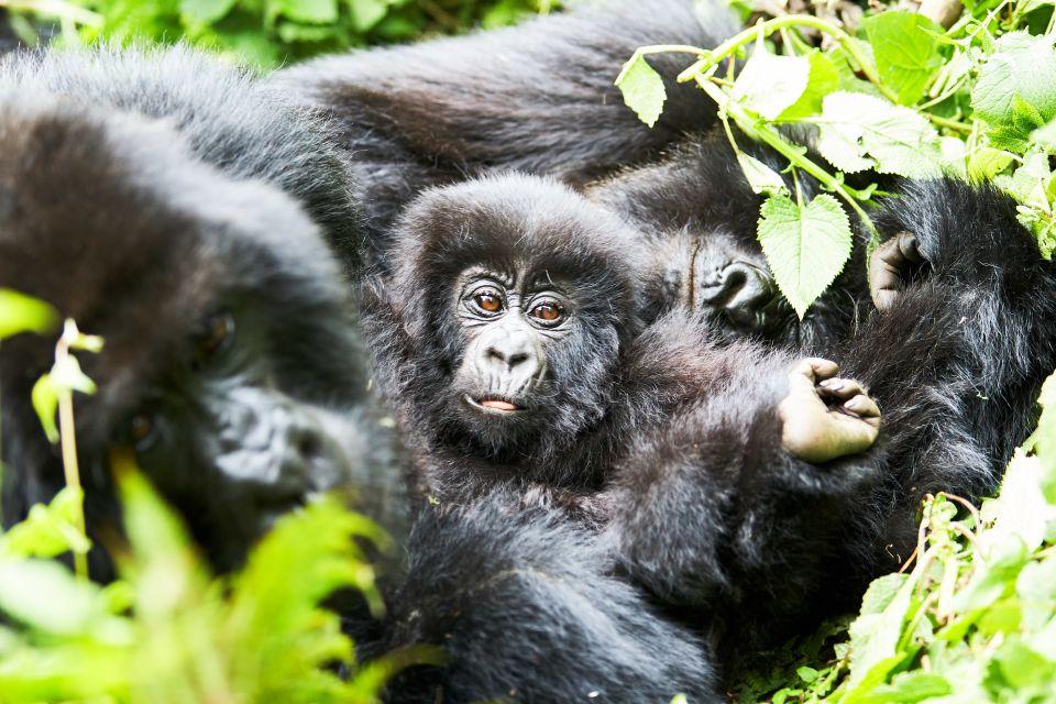 Nyungwe Nationa Park - Rwanda