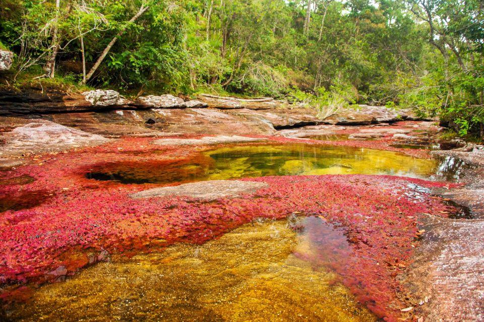 Río Caño Cristales in Colombia