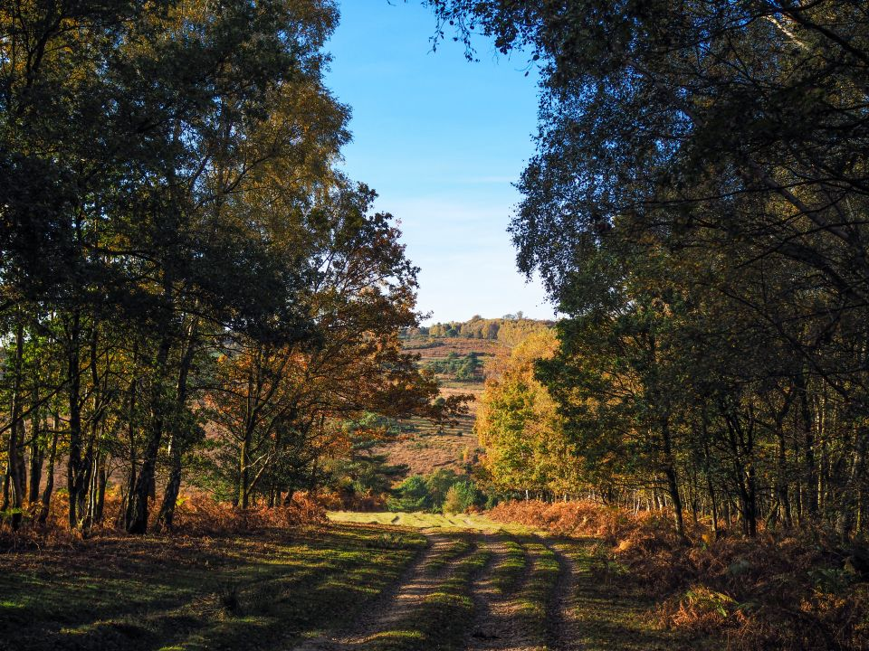 Ashdown Forest, East Sussex, UK
