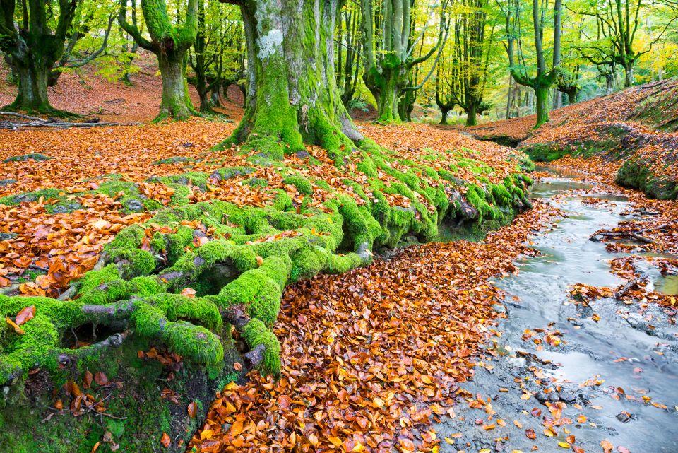 Otzarreta Forest, Basque Country, Spain