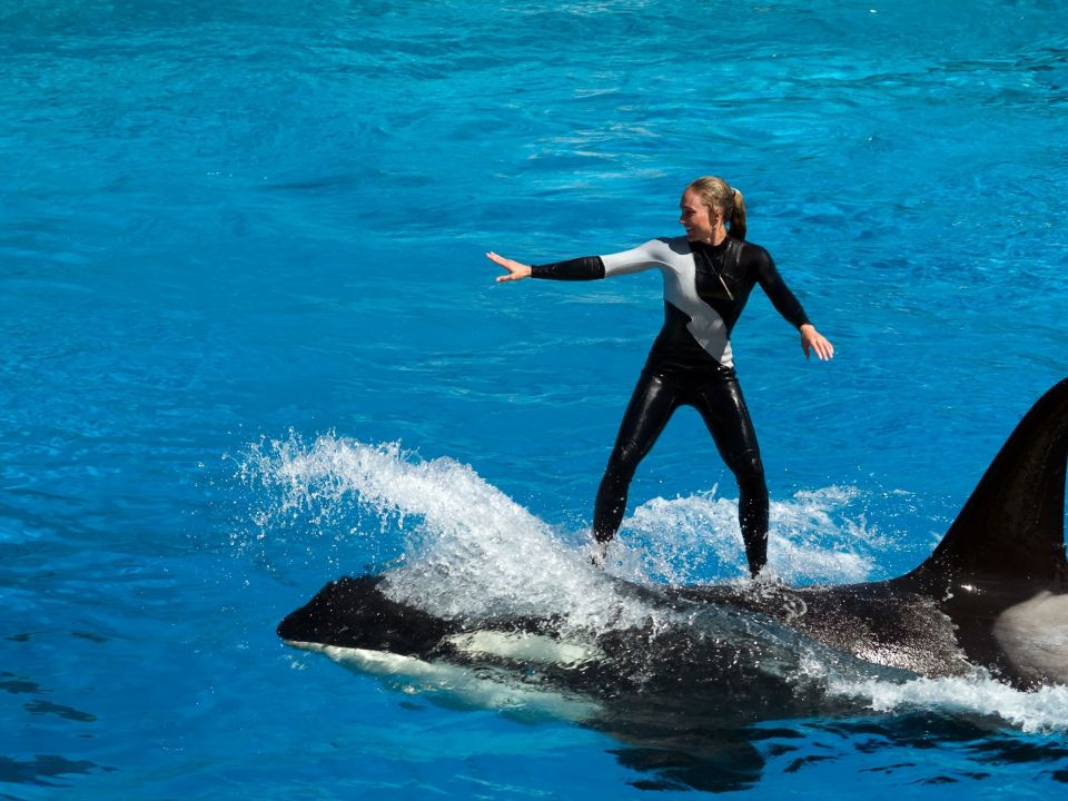 Dolphin and orca shows