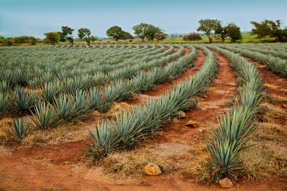 Travel the Tequila Trail