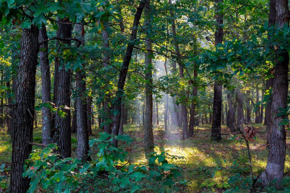 Se promener en forêt dans les Landes