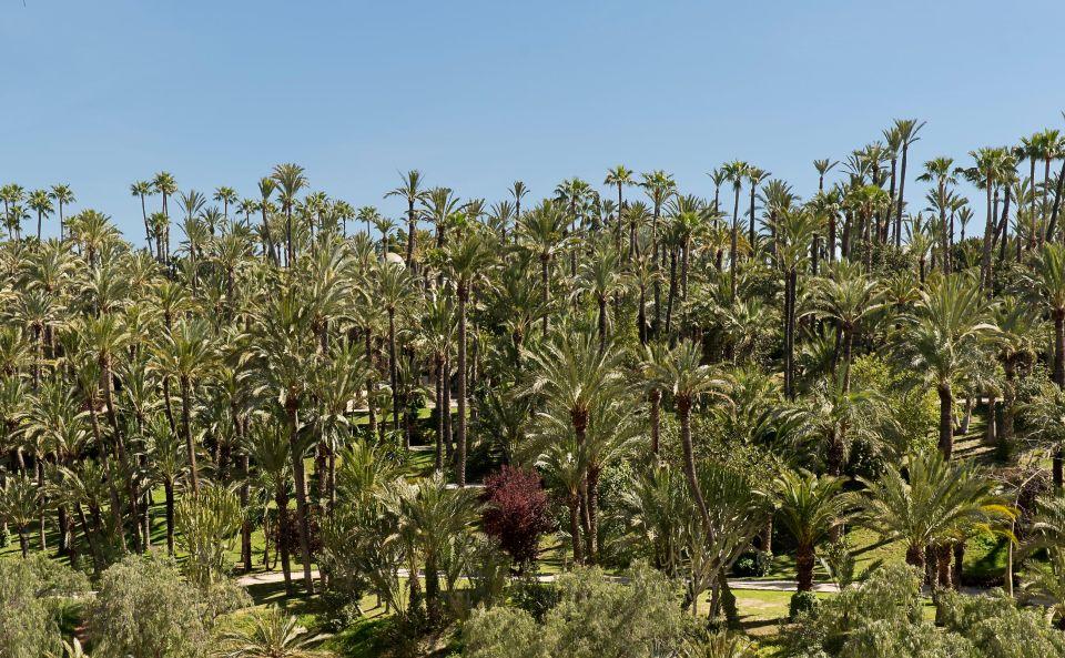 La plus grande palmeraie d'Europe - Elche