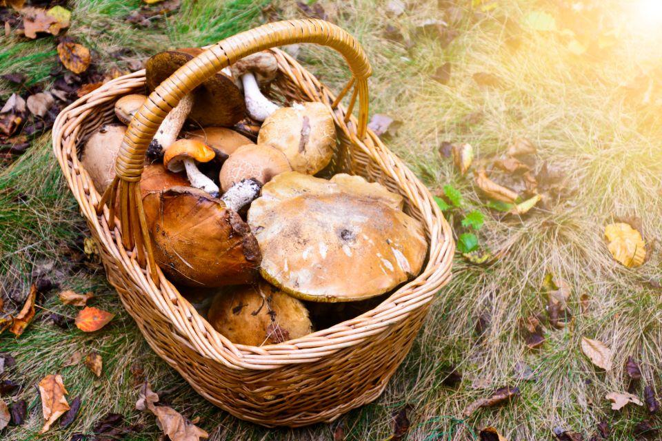 Ramasser les champignons