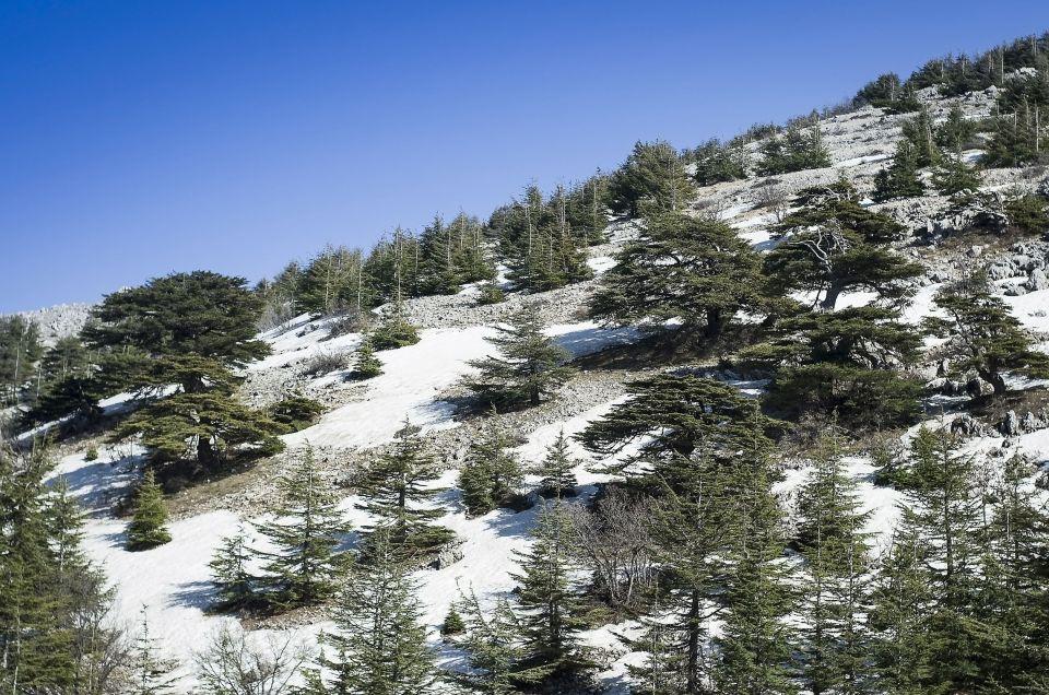Mzaar - Liban