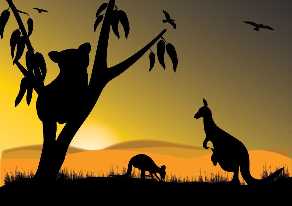 Känguru und Koala, Australien