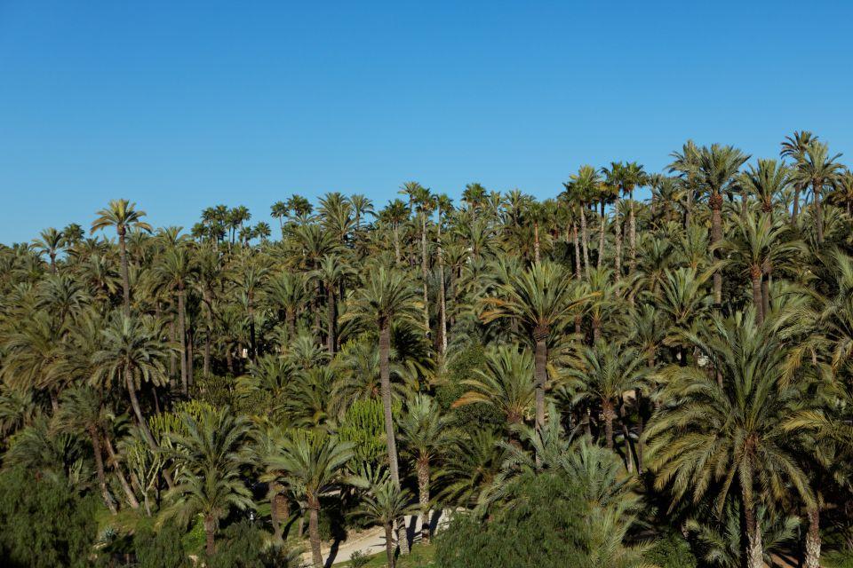 <b>2. El palmeral de Elche, España</b>