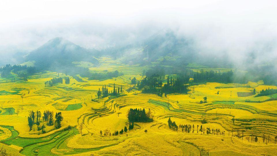 <b>4. Campos de flores de colza, China</b>