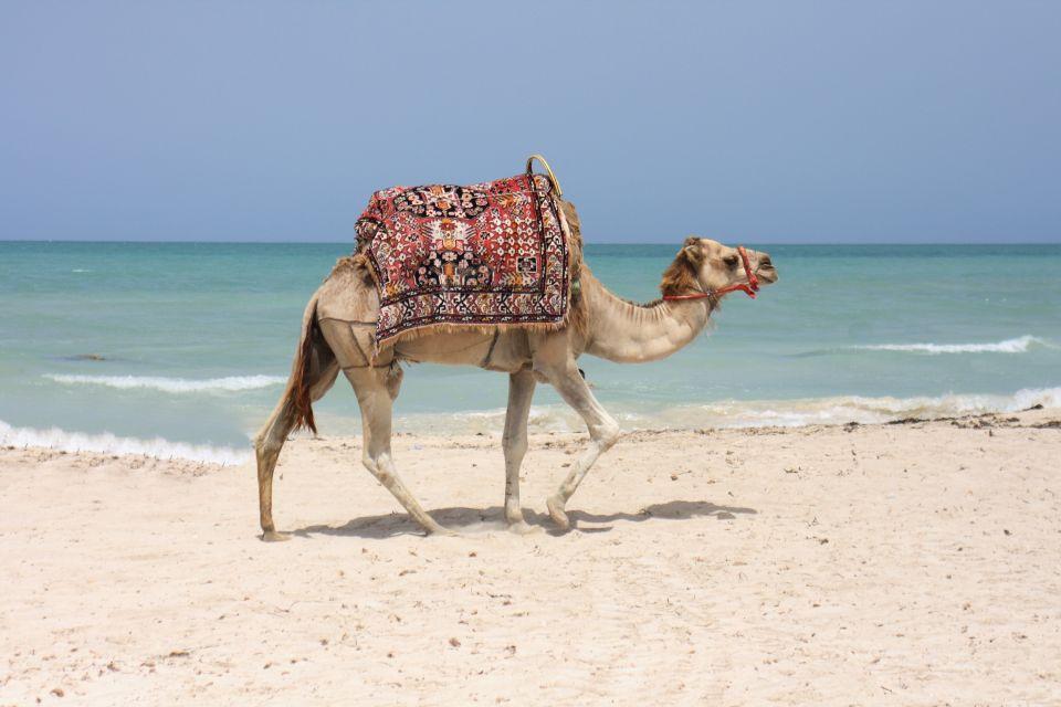 Dromadaire sur la plage à Djerba la Douce
