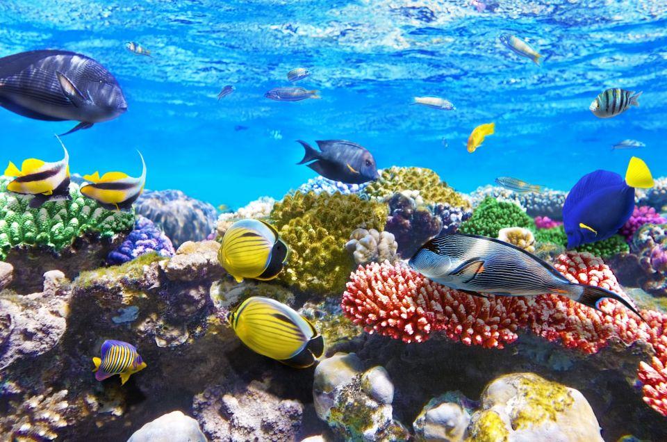 Coraux et poissons dans la mer Rouge à Hurghada