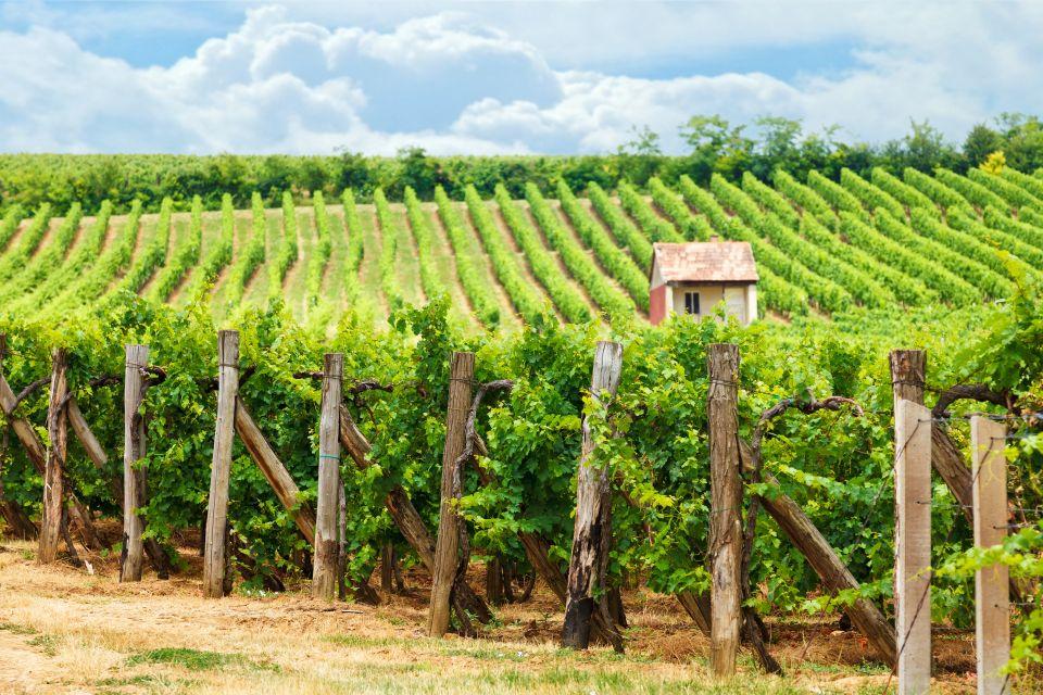 Blaufrankisch's vineyards