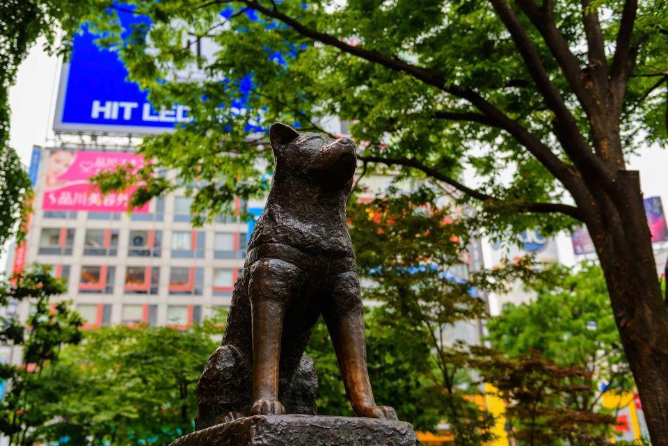 Segui le tracce di Hachiko, il cane più fedele del Giappone