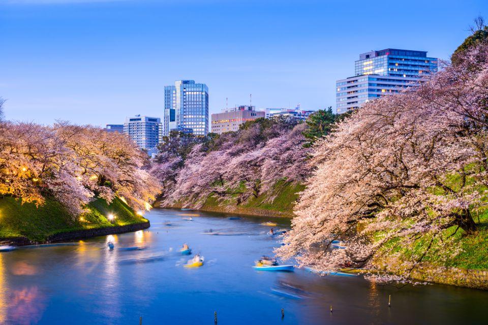 Osserva i petali di ciliego nei parchi più belli della città.