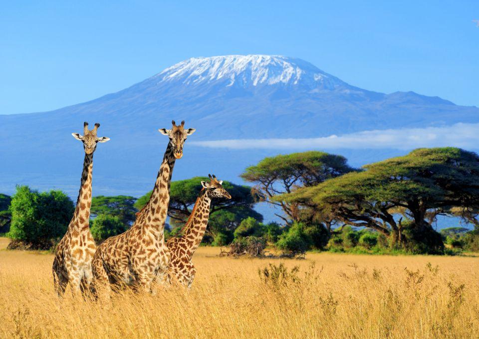 Mai: Klettern auf dem Kilimandscharo, Tansania