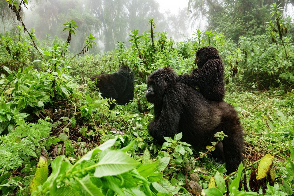 Febrero: safari en la selva tropical de Uganda