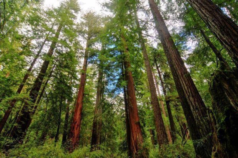 Parc national de Redwood