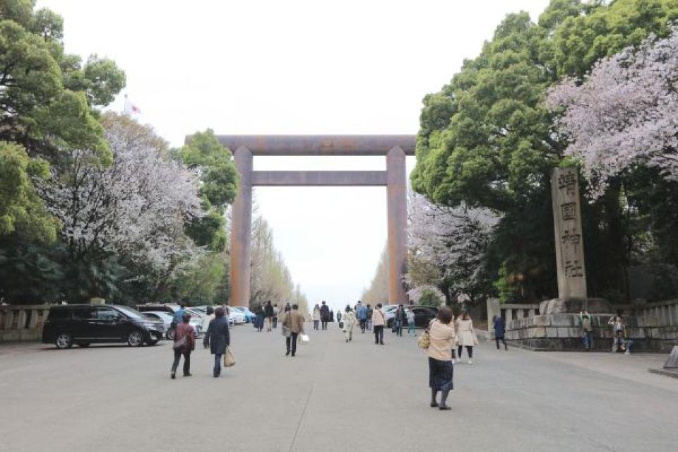 Enjoy the cherry blossoms at Yasukuni Shrine